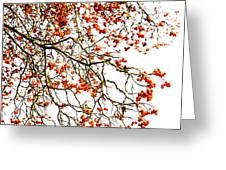 Beautiful Rowan 1 - Square Greeting Card
