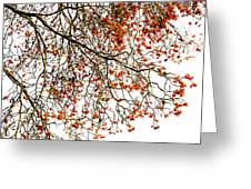 Beautiful Rowan 1 Greeting Card