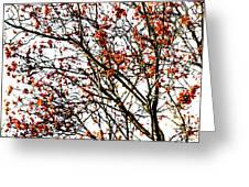 Beautiful Rowan 3 - Square Greeting Card