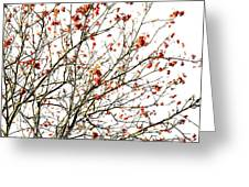 Beautiful Rowan 4 Greeting Card