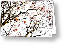 Beautiful Rowan 7 Greeting Card