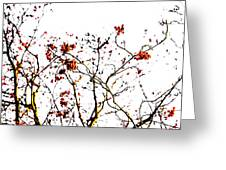 Beautiful Rowan 8 Greeting Card