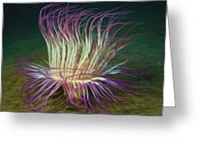 Beautiful Sea Anemone 1 Greeting Card by Lanjee Chee
