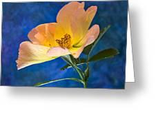 Beautiful Single Rose Greeting Card