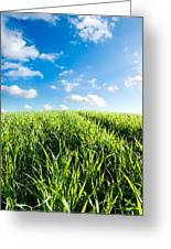 Beautiful Sky And Greens Greeting Card by Boon Mee
