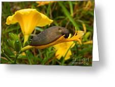 Beautiful Slug Greeting Card