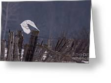 Beautiful Snowy Owl Flying Greeting Card
