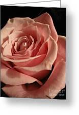Beautiful Peach Rose Greeting Card