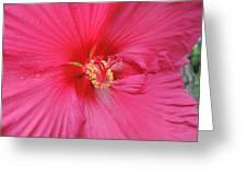 Beautiful Soul  Greeting Card