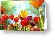 Beautiful Spring Tulips Greeting Card by Boon Mee