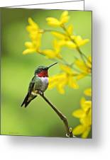 Beautiful Summer Hummer Greeting Card