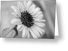 Beautiful Sunflower In Monocrome Greeting Card
