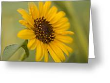 Beautiful Sunflower Greeting Card