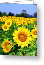 Beautiful Sunflowers Art Greeting Card by Boon Mee