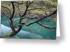 Beautiful Tree Over Blue Water Greeting Card