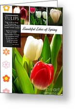 Beautiful Tulips Series 2 Greeting Card