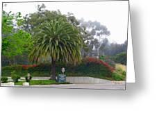 Beautiful Ventura Palm Greeting Card