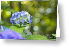 Beautiful Violet Hydrangea With Green Leaves And Bokeh Lights Greeting Card