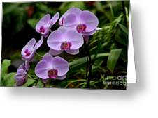 Beautiful Violet Purple Orchid Flowers Greeting Card