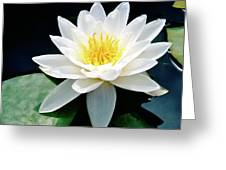 Beautiful Water Lily Capture Greeting Card