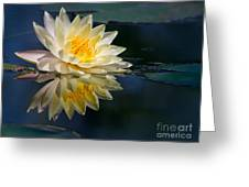 Beautiful Water Lily Reflection Greeting Card
