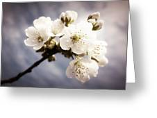 Beautiful White Blossoms Greeting Card