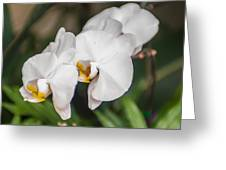 Beautiful White Orchids Flower Bloom Greeting Card