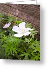 Beautiful Wild Geranium Greeting Card