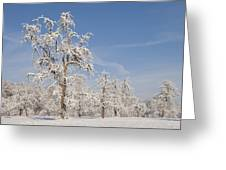 Beautiful Winter Day With Snow Covered Trees And Blue Sky Greeting Card