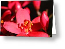 Beauty - Square Greeting Card
