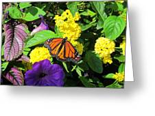 Beauty All Around Greeting Card