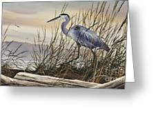 Beauty Along The Shore Greeting Card