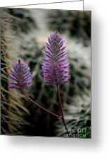 Beauty Among Thorns Greeting Card