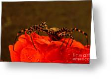 Beauty And The Bug Greeting Card