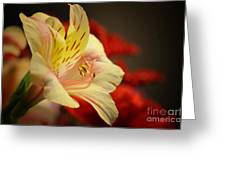 Beauty Beheld Greeting Card