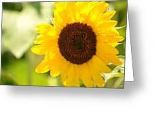 Beauty Beheld - Sunflower Greeting Card
