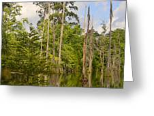 Beauty In A Swamp Greeting Card