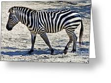 Beauty In Black And White Greeting Card