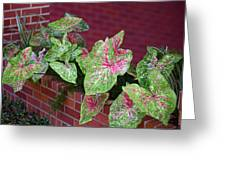 Beauty In Decorative Foliage Greeting Card