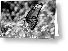 Butterfly Beauty In Nature Greeting Card