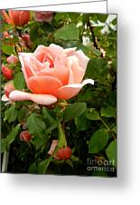 Beauty In Pink Greeting Card