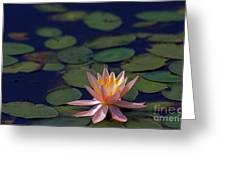 Beauty In Simplicity Greeting Card