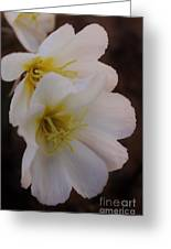 Beauty In The Canyon 2 Greeting Card