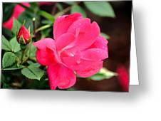 Beauty In The Garden Greeting Card
