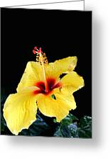 Beauty In The Natural Greeting Card