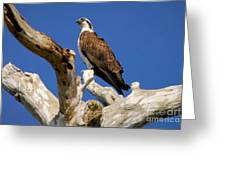 Beauty In The Tree Greeting Card