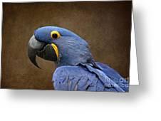Beauty Is An Enchanted Soul - Hyacinth Macaw - Anodorhynchus Hyacinthinus Greeting Card