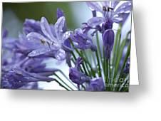 Beauty Lilies Greeting Card