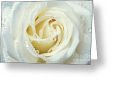 Beauty Of A White Rose Greeting Card