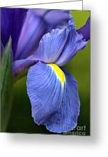 Beauty Of Iris Greeting Card